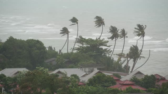 pabuk typhoon, ocean sea shore, thailand. natural disaster, eyewall hurricane. strong extreme cyclone wind sways palm trees. tropical flooding rain season, heavy tropical storm weather, thunderstorm - uragano video stock e b–roll