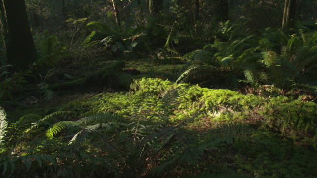 Pacific Northwest Forest Floor dolly shot video
