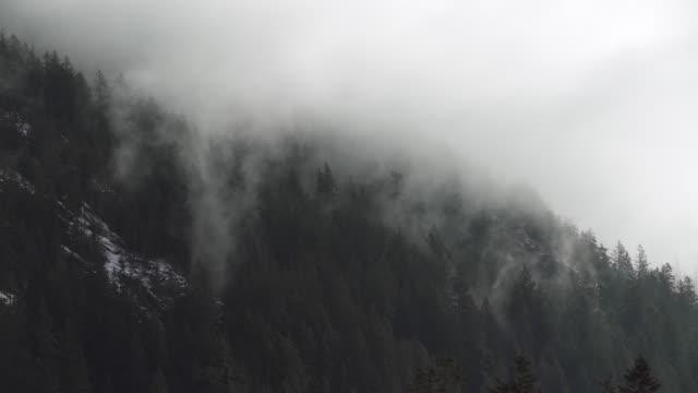 Pacific Northwest Forest Mist 4K UHD