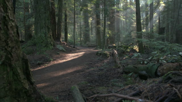 Pacific Northwest Forest Nature Path dolly shot.