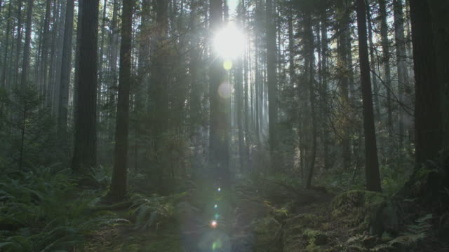 pacific northwest forest sunshine dolly shot - trees in mist stock videos & royalty-free footage