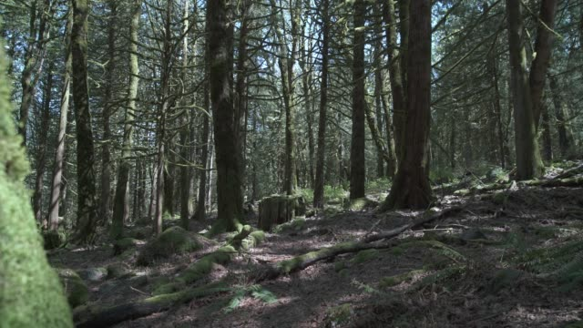 Pacific Northwest Moss and Trees 4K UHD