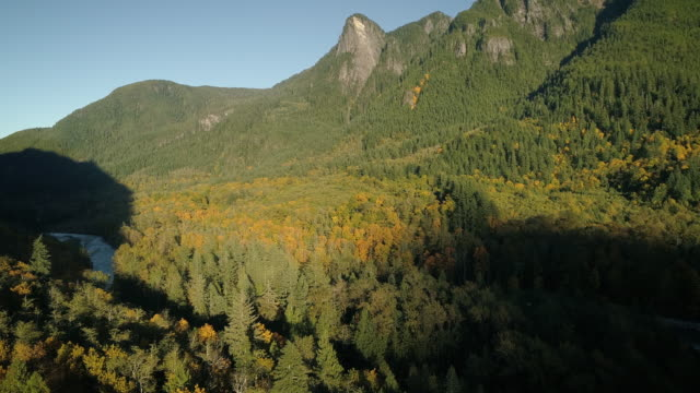 Pacific Northwest Mountain Aerial of Fall Colors on Forest Trees video