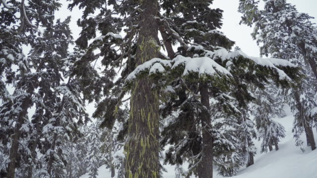 Pacific Northwest Winter Snow Tree Green Moss Washington Sate snowy scenic perspective looking up frest trees firewood stock videos & royalty-free footage