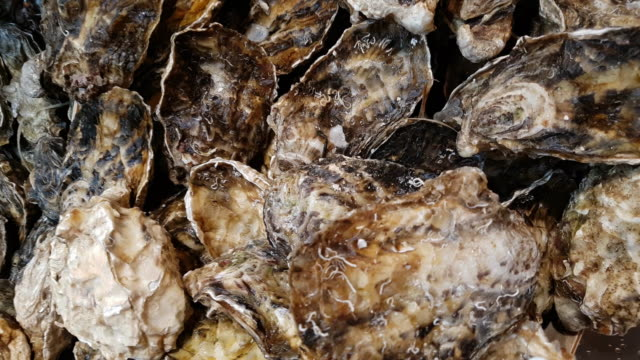pacific oysters on fish market display - crostaceo video stock e b–roll