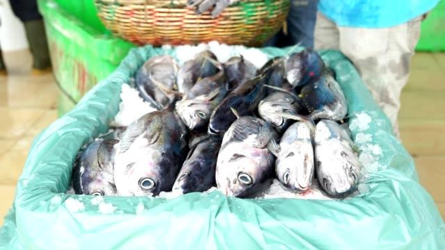 vídeos de stock e filmes b-roll de packaging fresh tuna with ice. - bacalhau