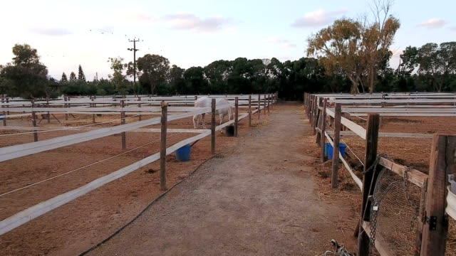 Paddocks with horses outdoors video