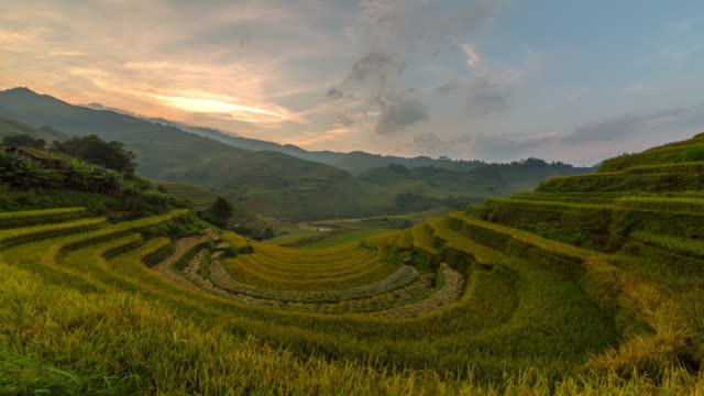 paddy field vietnam - orticoltura video stock e b–roll