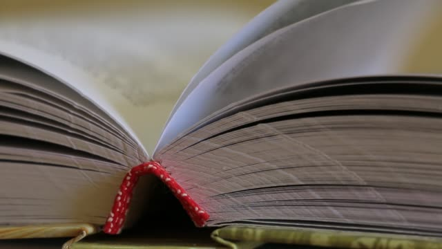 Pages of an open book - close-up view