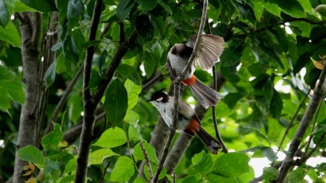 pair of bird in nature,4k video. - уход за поверхностью тела у животных стоковые видео и кадры b-roll