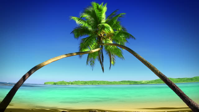 Pair of Coconut Palm trees entwined to form arch, Fiji. video