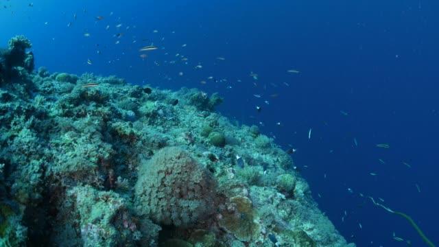 vídeos y material grabado en eventos de stock de arrecife de coral del palau, de peces de mar - zona pelágica