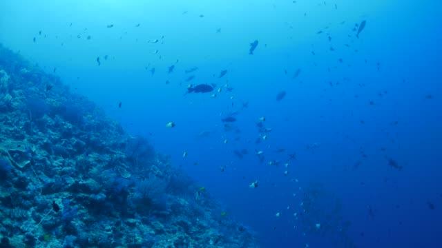 vídeos y material grabado en eventos de stock de arrecife de coral submarino de palau - sea life park