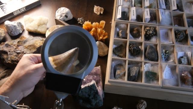 stockvideo's en b-roll-footage met paleontoloog studeren fossiele haai tand uit jurassic - dierlijk bot