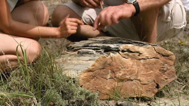 hd: paleontologia - 20 o più secondi video stock e b–roll