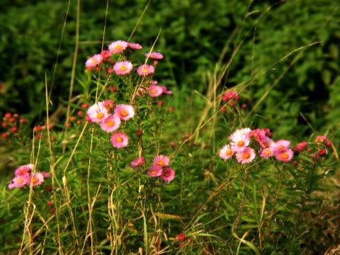 stockvideo's en b-roll-footage met pal:flowers - arthropod