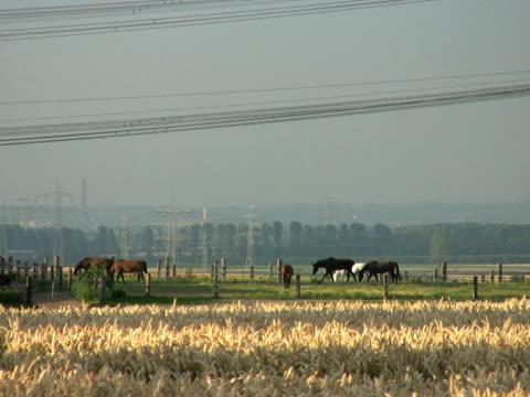 konie pal: - zachowanie zwierzęcia filmów i materiałów b-roll