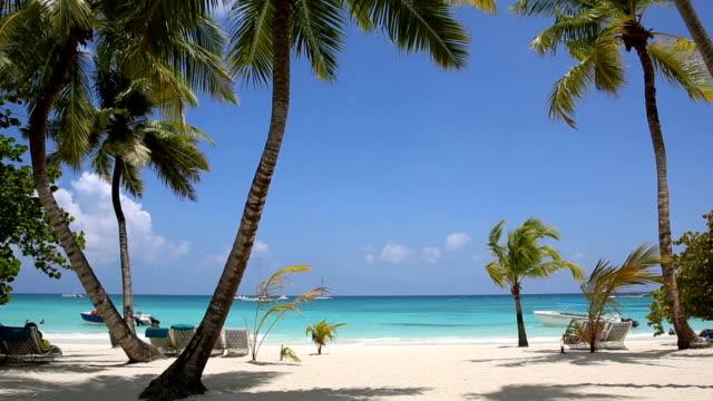 stockvideo's en b-roll-footage met palm en tropisch strand - caraïbische zee