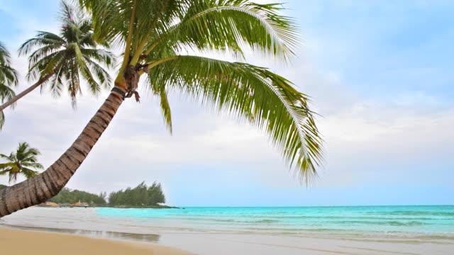 vídeos y material grabado en eventos de stock de palmeras en la playa vacía de curva - diez segundos o más