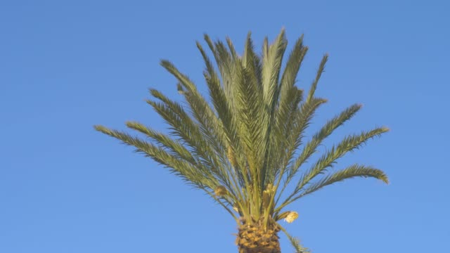 Palm in Wind on sunny day