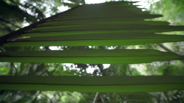 Palm Leaf In Forest