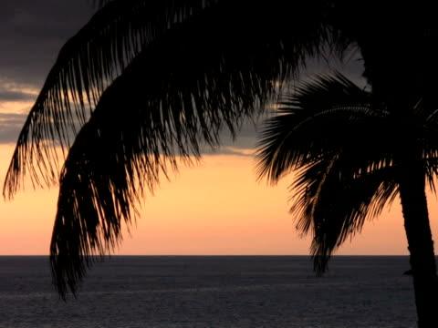 vidéos et rushes de ntsc: feuille de palmier - angiosperme