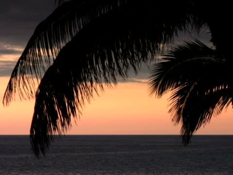 vidéos et rushes de pal: feuille de palmier - angiosperme