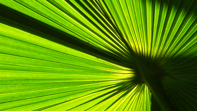 Palm leaf with sunlight