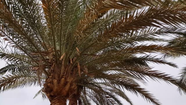 Palm leaves in the wind. video