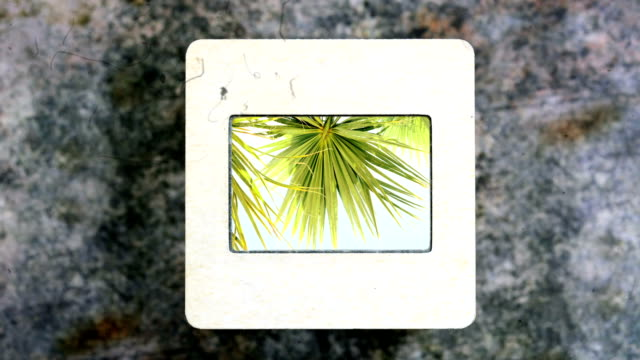Palm leaves on slide film video