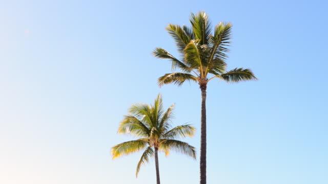palm-match made in heaven - palme stock-videos und b-roll-filmmaterial