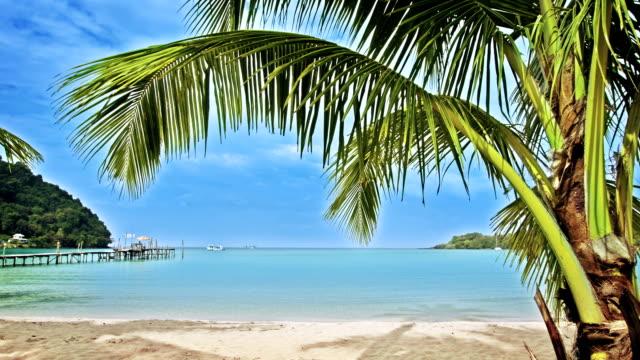 palm på stranden - vattenlandskap bildbanksvideor och videomaterial från bakom kulisserna