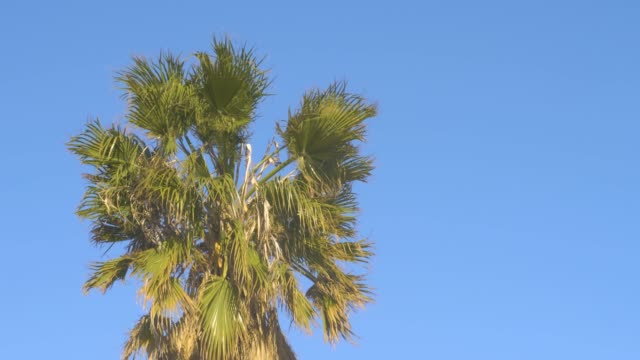 Palm top in Wind