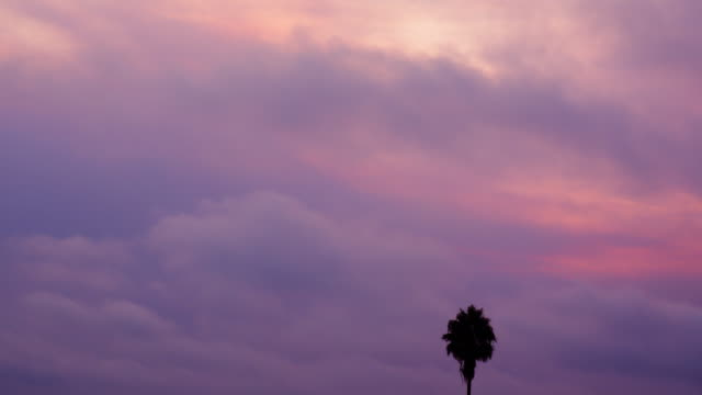 Palm tree against a pink and purple sky