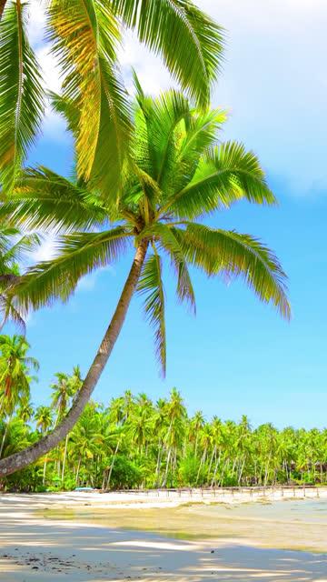 Palme und Meer – Video