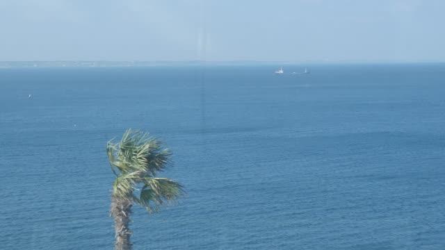 palmiye ağacı ve gemi arka planda - okyanus gemisi stok videoları ve detay görüntü çekimi