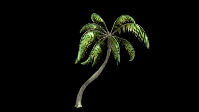 Palm Tree Animation video