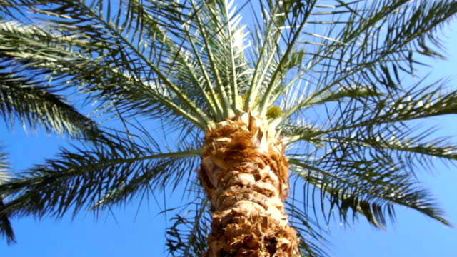 palm tree at bright sunny day video