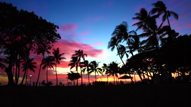 Palm tree at sunset in Honolulu,Oahu,Hawaii waikiki stock videos & royalty-free footage