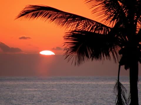 ntsc: palma al tramonto - parte della pianta video stock e b–roll