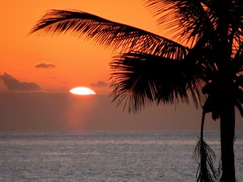 pal: palma al tramonto - parte della pianta video stock e b–roll