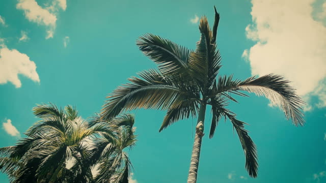 palm tree at the beach with blue sky and cloud in background - vintage style effect. video
