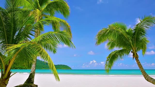 vídeos de stock e filmes b-roll de palmeira e praia - plano picado