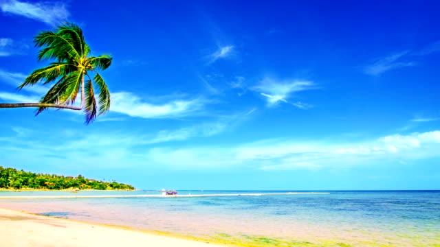 Palm tree beach video