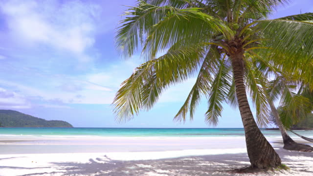 palm tree beach - exotic stock videos & royalty-free footage