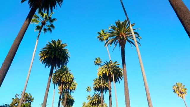 dłoń drzewo jazdy - palm tree filmów i materiałów b-roll