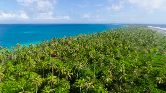 Palm tree forest near a golden beach on an island. An amazing paradise for relaxing holidays under the sun. Waves come and go on the beach. Travel tropical concept - aerial view with a drone - 4K