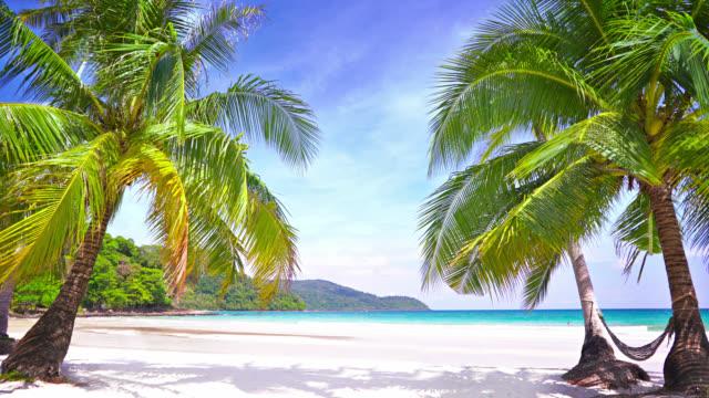 Palmentor zum tropischen Strand – Video