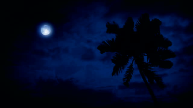 Palm Tree In Breeze With Moon Above video