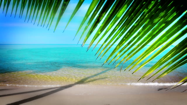 Palm tree leaf over seashore video